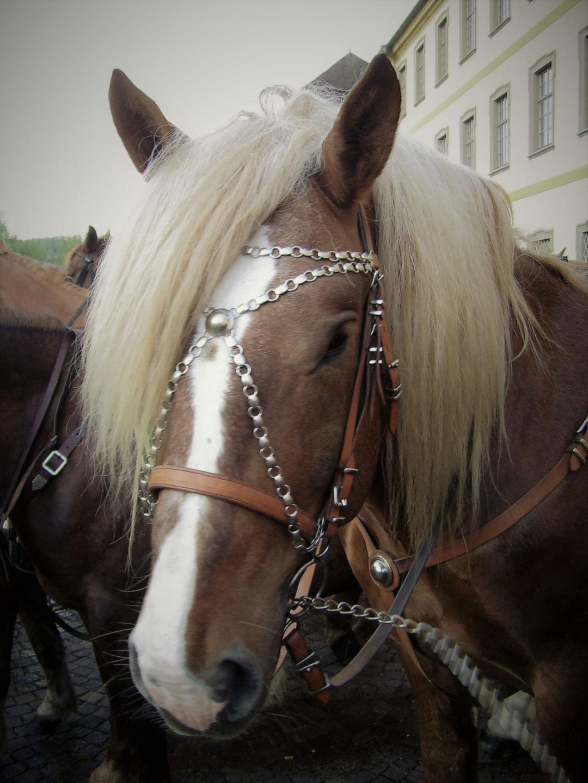 pferde_01