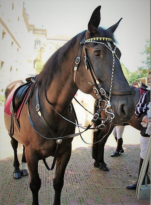 pferde_04