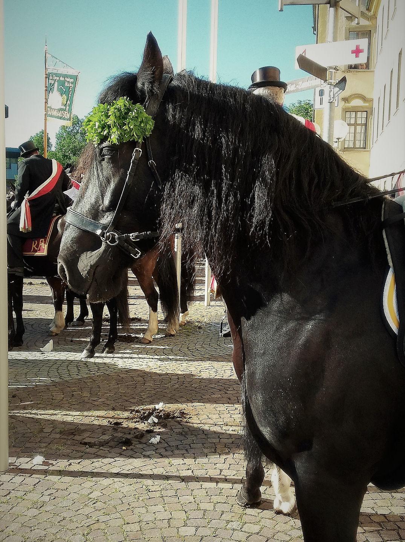 pferde_05