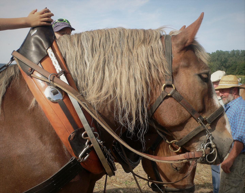 pferde_07